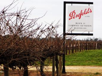 penfolds block (2)